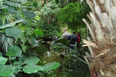 Palmengarten 2005