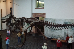 Senckenbergmuseum 2005