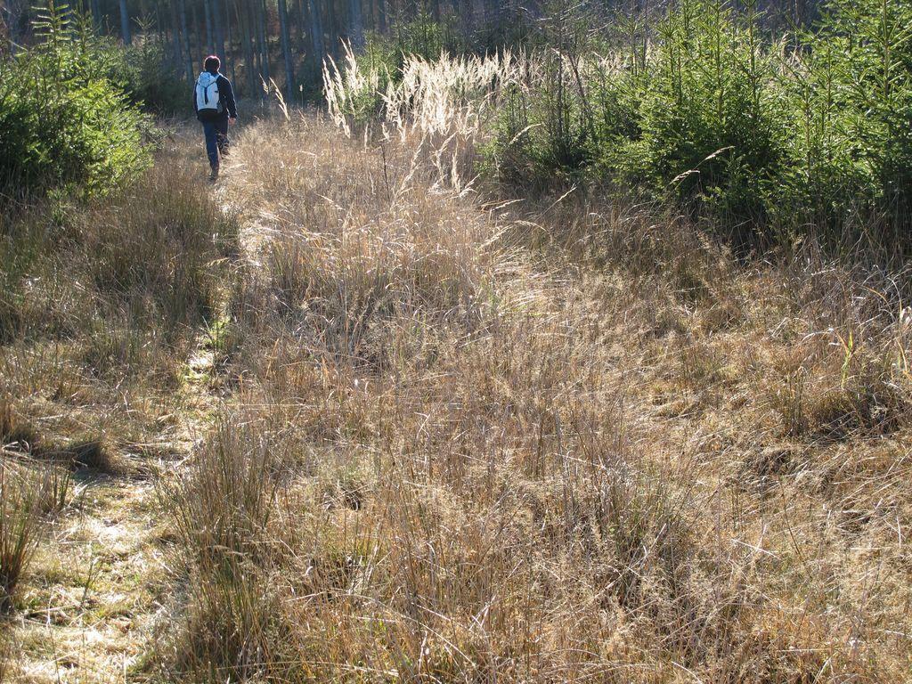 falkenstein_winter_2012_33_20120127_1429739392