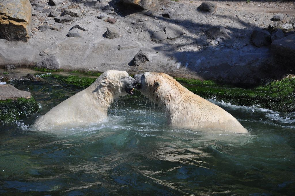 hannover_zoo_2015_325_20150715_1136833058