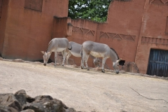 Hannover Zoo