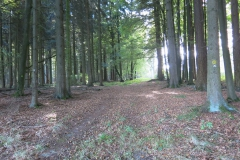 Mountainbiking: Emstal-Habichtswald