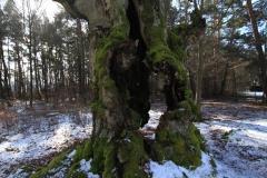 Wandern im Kellerwald: Hutewald-Albertshausen