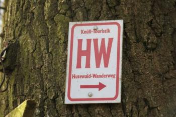 Wandern im Knüllwald: Hutewald-Wanderweg