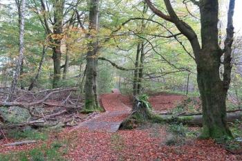 Wandern im Reinhardswald: Sababurg