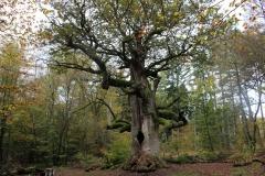 Wandern im Reinhardswald: Urwald-Sababurg