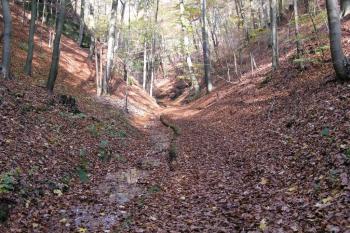 Wandern im Thüringer-Wald: Landgrafenschlucht