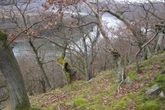 Wandern am Edersee: Knorreichenstieg