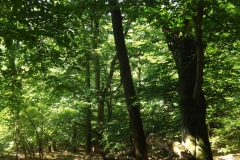 Edersee Knorreichenpfad